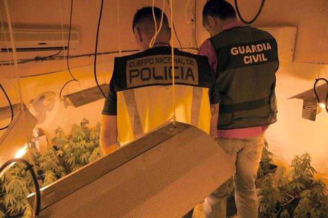 Agentes en la plantación casera de marihuana
