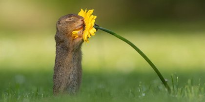 Una ardilla se detuvo frente al objetivo de un fotógrafo para olisquear una flor y éste capturó la curiosa escena