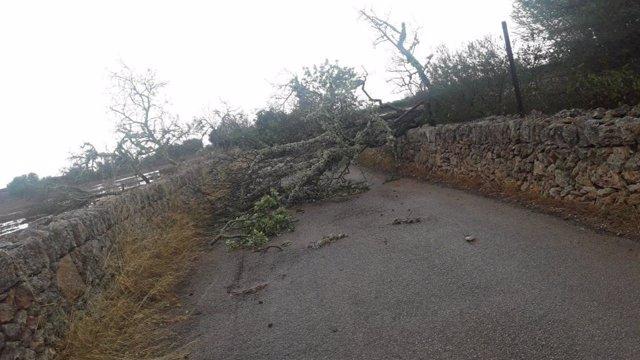 Un árbol caído por el temporal corta el paso en una carretera en una imagen de archivo