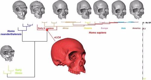 Recreación virtual del cráneo del primer Homo Sapiens
