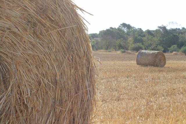 Empieza el proceso de adjudicación de la alfalfa en el marco de la campaña de ay