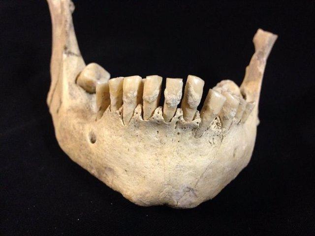 Los restos más antiguos de consumo de leche, en dientes de 6.000 años