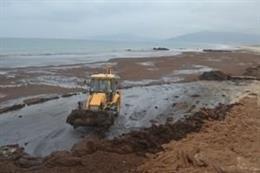 Retirada de alga invasora asiática en playa de Tarifa