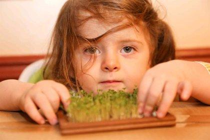 Ofrecer variedad de verduras a los niños, clave para que la acepten y consuman