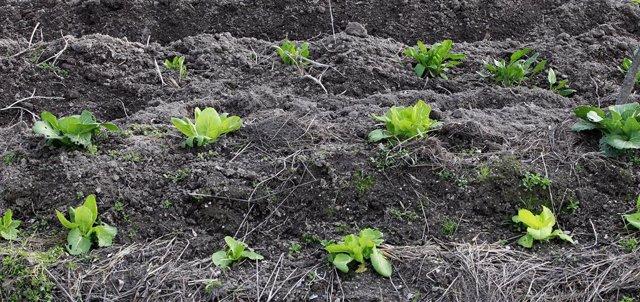Consejo.- Agricultura aprueba programas para eliminar trabas burocráticas en ayu