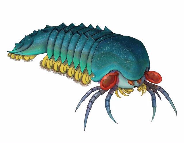 Un pequeño depredador de 500 millones de años, origen de escorpiones y arañas