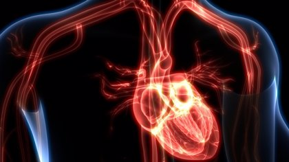 Prueban un hidrogel para reparar el corazón