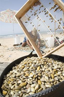 Huelva.- La Junta trabaja con el Espacio Natural para que los mariscadores de Hu