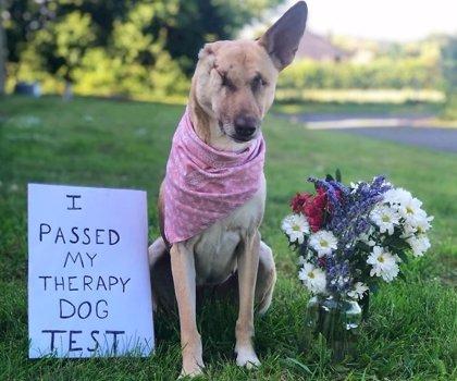 Maggie, la perra que sobrevivió a 17 disparos y se convirtió en perro de terapia
