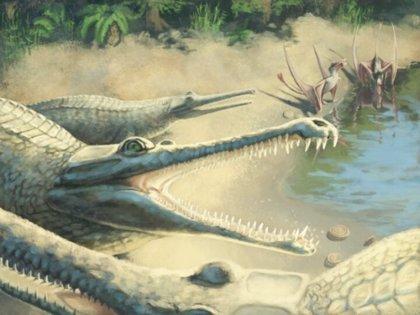 Un cocodrilo del Jurásico, identificado 250 años después de su hallazgo