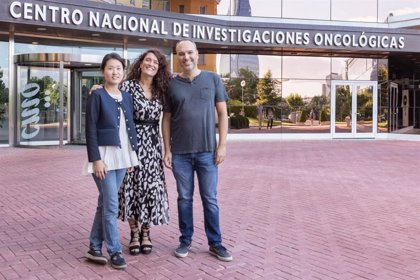 El CNIO potencia sus líneas en metástasis y reparación del ADN con la creación de tres nuevos grupos de investigación