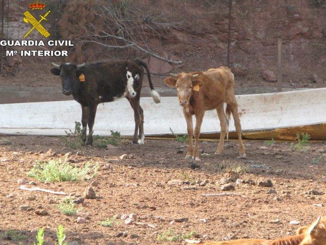 LA GUARDIA CIVIL INVESTIGA A UNA PERSONA POR UN DELITO DE MALTRATO ANIMAL DE 11 BOVINOS Y UN CABALLO