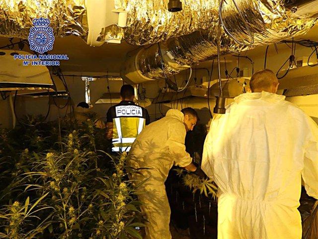 Plantación de marihuana desmantelada en Nambroca