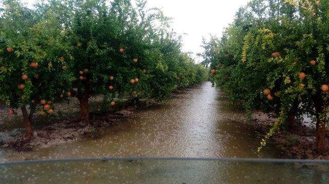 Campos de naranjos anegados tras el paso de la gota fría.