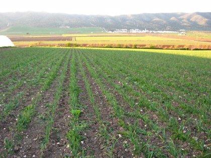 Huelva continúa líder en la agricultura ecológica andaluza con un 3,1% más de superficie hasta las 193.877 hectáreas