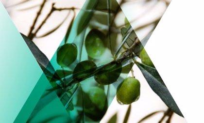 La producción nacional de aceite de oliva aumentará en torno a un 40% en la presente campaña, según CESCE
