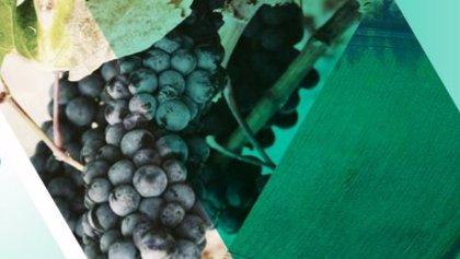 Un 'Brexit duro' no afectará a frutas y hortalizas frescas comunitarias, según CESCE