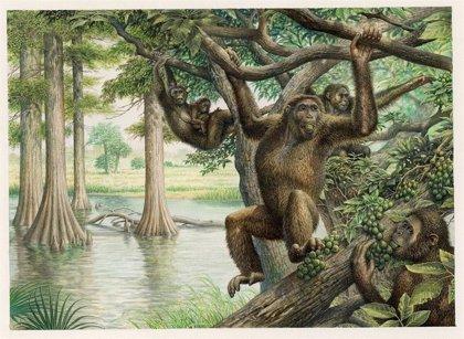 El bipedalismo humano tuvo orígenes más profundos de lo establecido