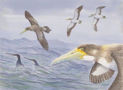 Conoce al pequeño ancestro de las aves voladoras más grandes