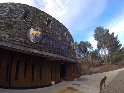 El Centro del Lobo celebra el sábado jornada de puertas abiertas para mostrar a sus nuevos lobeznos