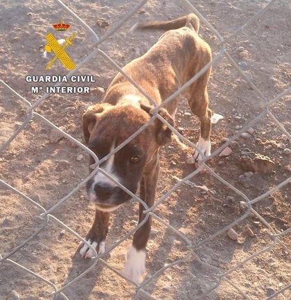 Investigan de nuevo en Burgos a un criador de perros, su ayudante y un veterinario por maltrato animal