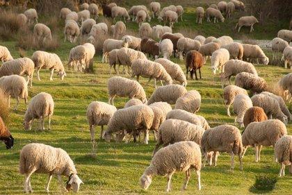 Agricultura señala que la mejora en procesos productivos ha reducido el impacto medioambiental de la ganadería