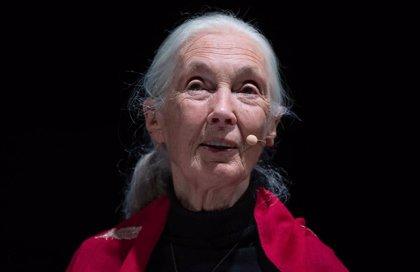 La científica Jane Goodall se suma a la campaña de LOS40 para luchar contra el cambio climático