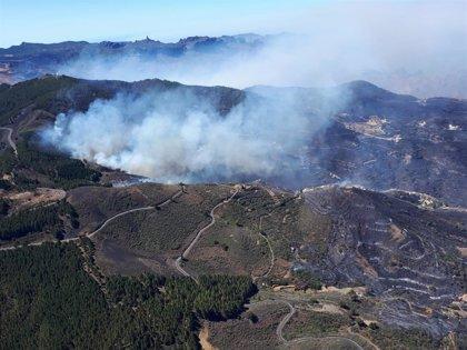 El Gobierno destina un millón a la reforestación de las zonas afectadas por el incendio en Gran Canaria