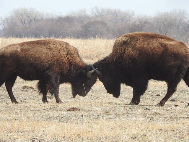 La extinción de grandes mamíferos separó a los supervivientes