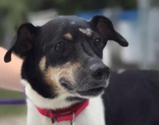 Zippy, el perro que sacrificó su vida para salvar la de su familia en un incendio