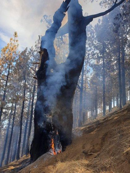El Cabildo de Gran Canaria recuerda que el incendio aún no está extinguido y que pueden rebrotar llamas