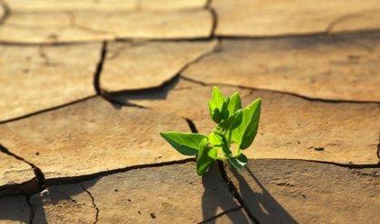 Expotural colaborará el próximo fin de semana con la Carrera por el Clima y el Desarrollo Humano Sostenible