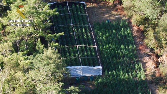 Imagen aérea de la plantación de marihuana desmantelada por la Guardia Civil en el Parque Natural Sierra Norte de Guadalajara