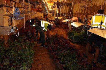 Detenidos tres hombres por plantar marihuana a gran escala en chalets y naves de varios municipios valencianos