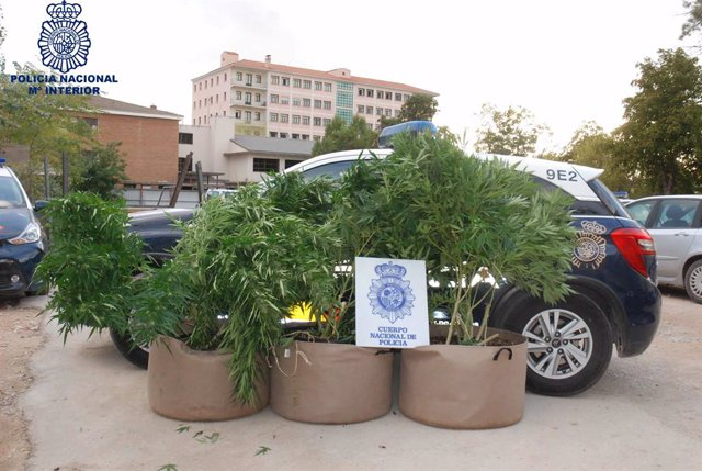 Sucesos.- La Policía detiene en Cuenca a una persona que cultivaba marihuana en