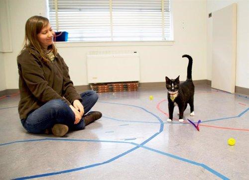 Kristyn Vitale Durante El Estudio Con Un Gato En Su Laboratorio