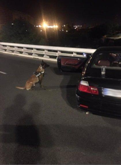 Detenido un hombre por agredir a un perro de la Unidad Canina de Policía de València