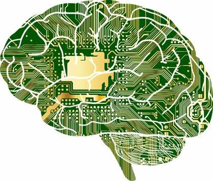 Descubren cómo el cerebro reutiliza las regiones que no usa