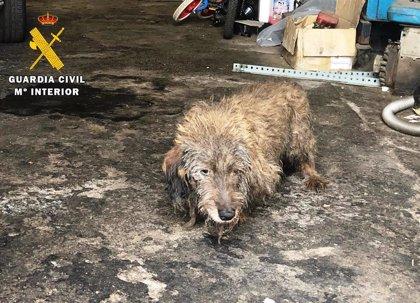 Investigan a dos personas por tener seis perros heridos, con pulgas y abandonados