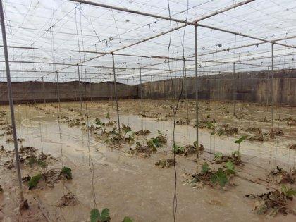 """COAG-A critica que aún """"no han llegado"""" las ayudas de la Junta a agricultores """"doce días después"""" del temporal"""