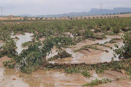 COAG MURCIA reclama mejoras en el desarrollo del Decreto de medidas urgentes de ayudas para paliar daños DANA