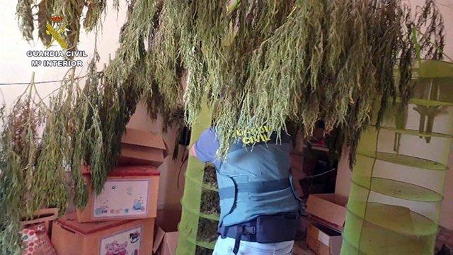 Droga incautada en La Puebla (Sevilla), en el marco de la Operación 'Pudeca'