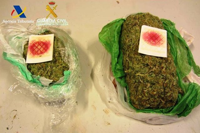 Marihuana intervinguda per la Guàrdia Civil.