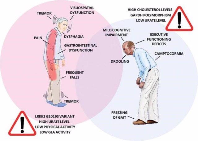 Infografía de las diferencias en la sintomatología del Parkinson y factores de riesgo entre mujeres y hombres