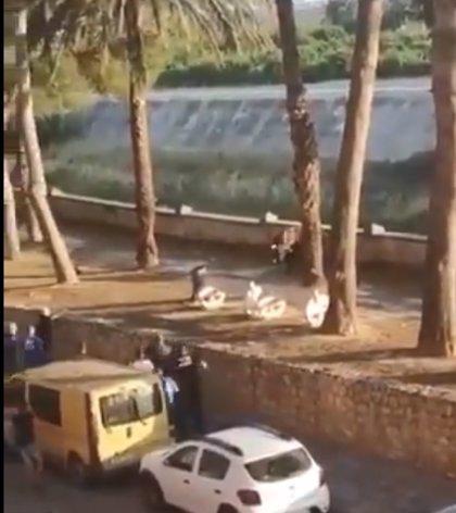 """ANPBA pide investigar """"presuntas responsabilidades"""" del Ayuntamiento de Algemesí por la huida y muerte de un novillo"""