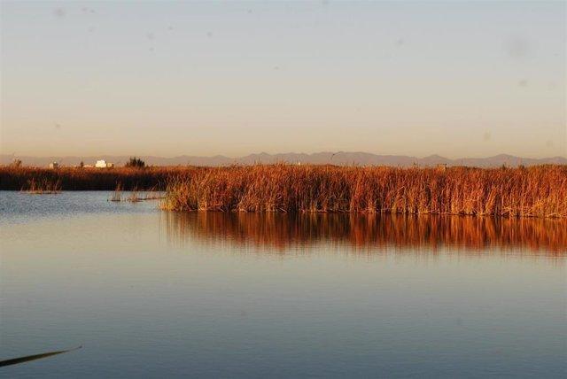 Imagen del lago de la Albufera de València