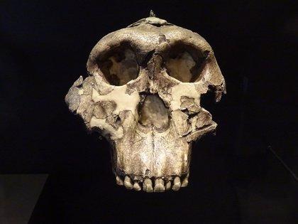 Las especies humanas extintas les dieron a los humanos modernos un impulso de inmunidad