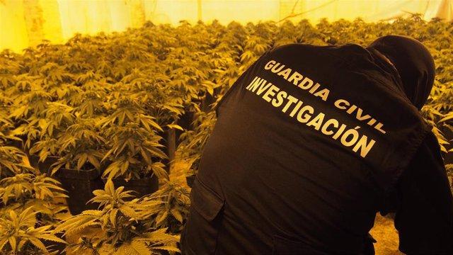 Guardia Civil junto a una plantación de marihuana en una foto de archivo