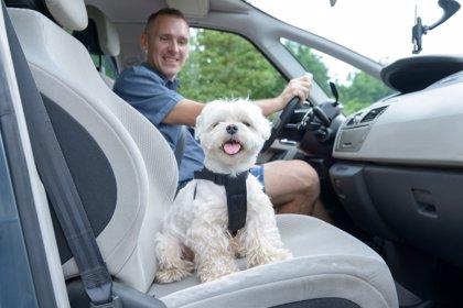 De viaje con tu mascota en el coche: 10 consejos útiles