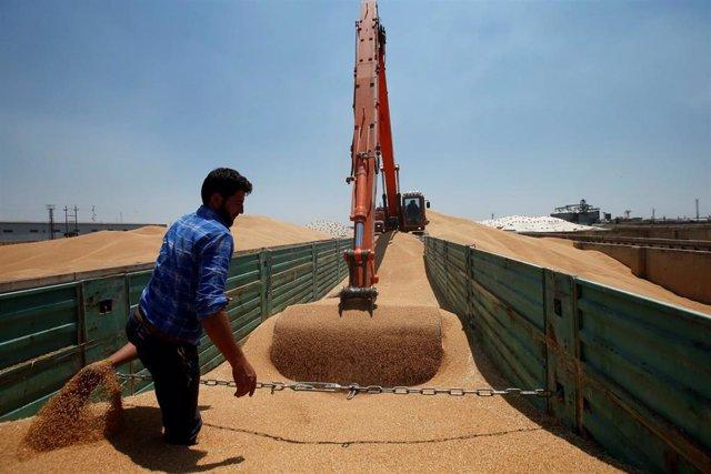 Un granjero ayuda a una excavadora a descargar grano de trigo en un silo en Mosul